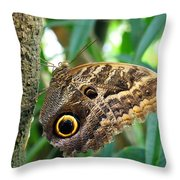 Mournful Owl Butterfly Throw Pillow