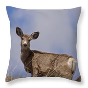 Mule Deer   #0722 Throw Pillow