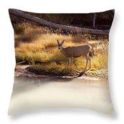 Mule Deer   #3942 Throw Pillow