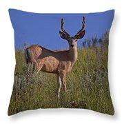 Mule Deer Buck In Velvet   #2231 Throw Pillow