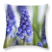 Muscari Or Grape Hyacinth Throw Pillow