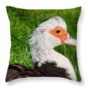 Muscovy Duck Throw Pillow