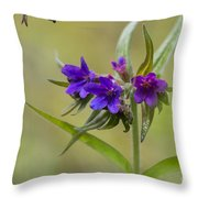 Purple Gromwell Throw Pillow