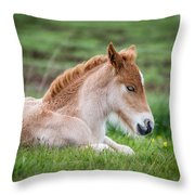 New Born Foal, Iceland Purebred Throw Pillow