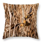 New Zealand Fantail Chicks Being Fed By Parents Throw Pillow