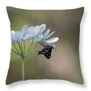 Nine-spotted Moth Throw Pillow