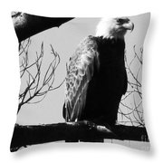 North American Bald Eagle Throw Pillow
