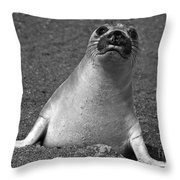 Northern Elephant Seal Weaner Throw Pillow