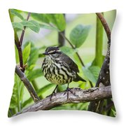 Northern Water Thrush Throw Pillow