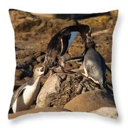 Nz Yellow-eyed Penguins Or Hoiho Feeding The Young Throw Pillow