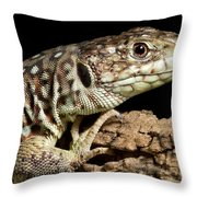 Ocellated Lizard Timon Lepidus Throw Pillow
