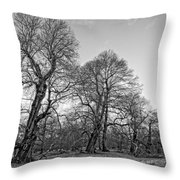 Old Trees Throw Pillow