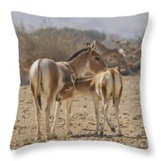 Onager Equus Hemionus Throw Pillow