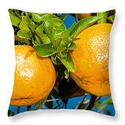 Orange Fruit Growing On Tree Throw Pillow