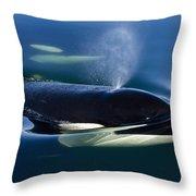 Orca Whale Surfaces In Lynn Canal Throw Pillow