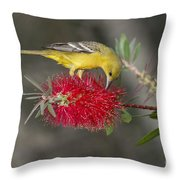 Orchard Oriole Throw Pillow