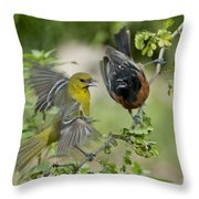 Orchard Orioles Throw Pillow