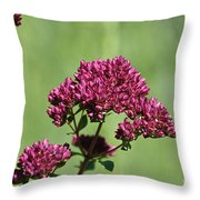 Oregano Throw Pillow