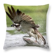 Osprey With A Living Fish, Fischadler Throw Pillow