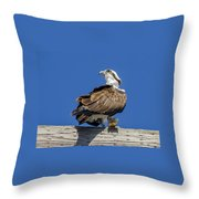 Osprey With Fish In Talons Throw Pillow
