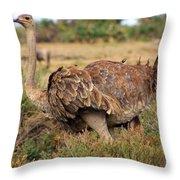 Ostrich Throw Pillow