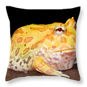Pac Man Frog Ceratophrys Throw Pillow