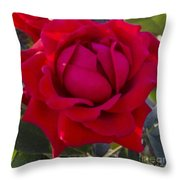Painting Of A Rose Throw Pillow