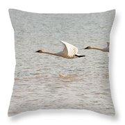 Pair Of Flying Trumpeter Swans Cygnus Buccinator Throw Pillow