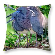 Pair Of Tricolored Heron At Nest Throw Pillow
