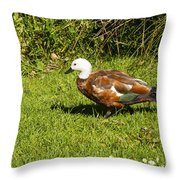 Female Paradise Duck Throw Pillow