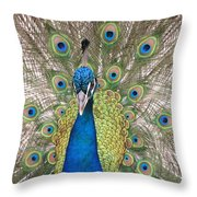 Peacock Full Plumage Throw Pillow