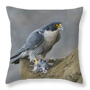 Peregrine Eating Pigeon Throw Pillow