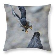 Peregrine Falcons Mating Throw Pillow