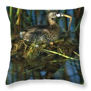 Pied-billed Grebe Nesting Texas Throw Pillow