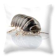 Pill-bug Armadillidium Vulgare Throw Pillow