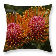 Pincushion Flowers Throw Pillow