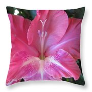 Pink And White Gladiolus Throw Pillow