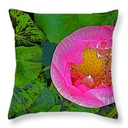 Pink Lotus In Backyard Of Home In Bangkok-thailand. Throw Pillow