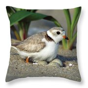 Piping Plover Charadrius Melodus Throw Pillow