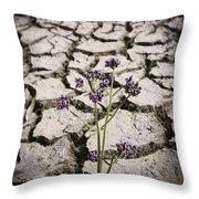Plant Growing Through Dirt Crack During Drought   Throw Pillow