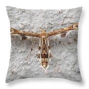 Plume Moth Throw Pillow