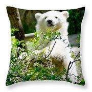 Polar Bear Cub  Throw Pillow