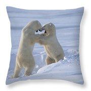 Polar Bear Males Sparring Churchill Throw Pillow