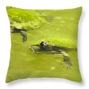 Pond Turtles Throw Pillow