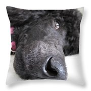 Poodle Close-ups 1 Throw Pillow