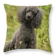 Poodle Dog Throw Pillow