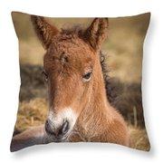 Portrait Of Newborn Foal Throw Pillow
