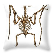 Pterodactylus, Extinct Flying Reptile Throw Pillow