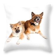 Icelandic Sheepdog Puppy And Adult  Throw Pillow