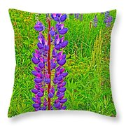 Purple Lupine On Campobello Island-nb Throw Pillow